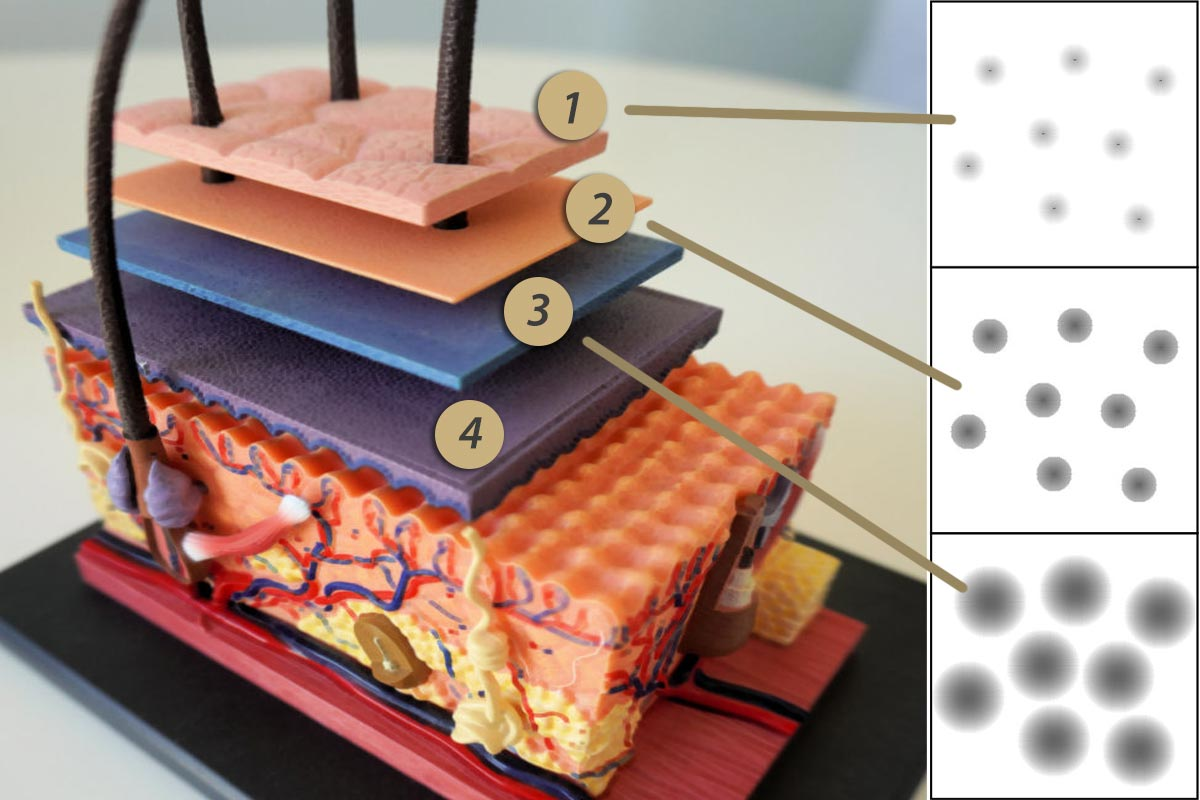 hautschichten microhaarpigmentierung proaesthetic